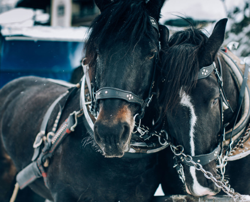 Pferdeschlittenfahrten in Lech & Zürs